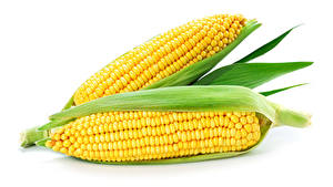 Картинка Овощи Кукуруза Белый фон Два Еда