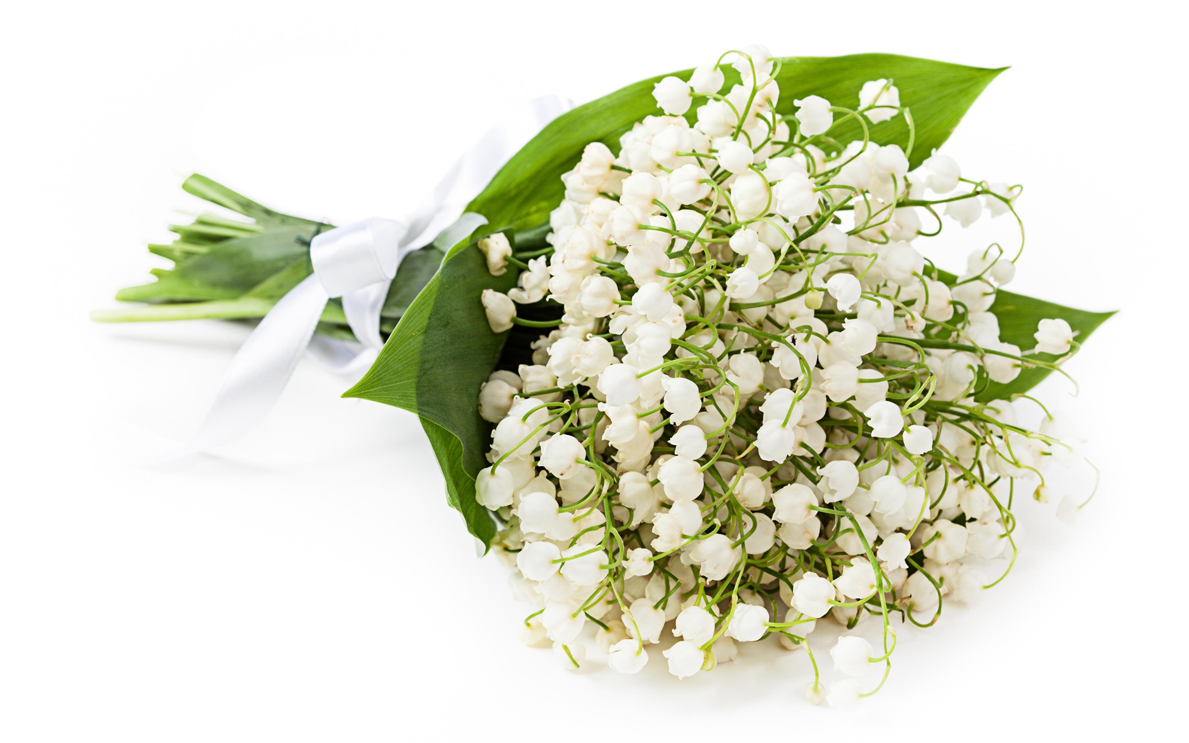 Обои ландыши, елые, цветы. Цветы foto 18