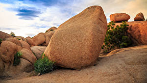 Картинка Штаты Парки Камень Калифорния Joshua Tree National Park Природа