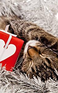 Картинки Рождество Кошка Подарки Спят Кубик животное