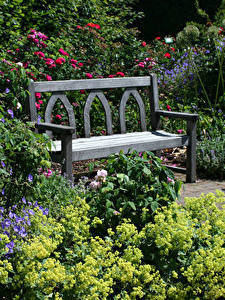 Фото Великобритания Сады Скамья Кустов Rosemoor Gardens Природа
