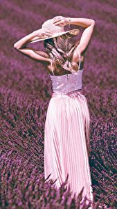 Картинка Поля Лаванда Блондинки Руки Шляпе