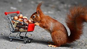Фотография Белки Орехи Покупки Животные