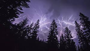 Картинки Небо Молния Ель Ночные Природа