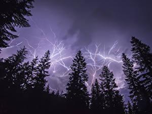 Картинки Небо Молния Ель В ночи Природа