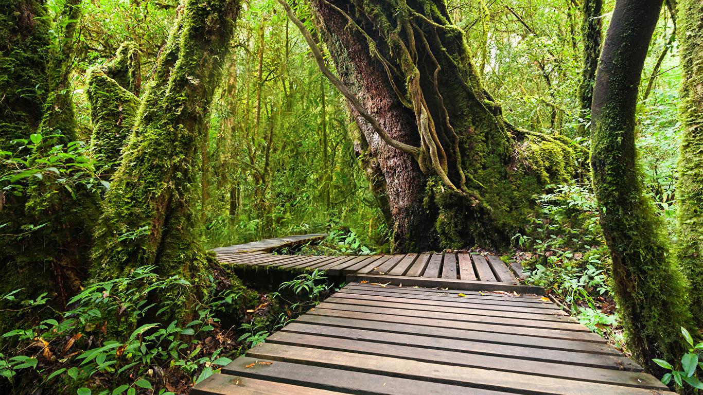 Обои для рабочего стола Таиланд Doi Inthanon National Park Природа лес Парки Тропики Ствол дерева Мох 1366x768 Леса парк тропический мха мхом