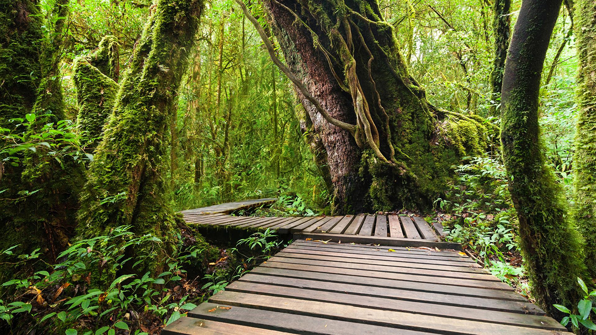 Обои Таиланд Doi Inthanon National Park Природа Леса Парки Тропики Ствол дерева Мох 1920x1080