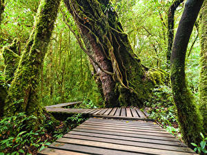Обои Таиланд Тропики Парк Леса Мох Ствол дерева Doi Inthanon National Park