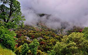Фотографии США Парки Леса Калифорния Туман Деревья Sequoia National Park