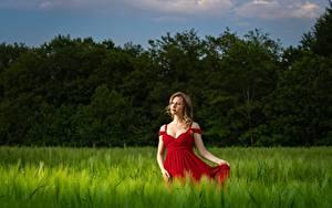 Фотографии Поля Пшеница Платья Волос Поза Руки молодая женщина