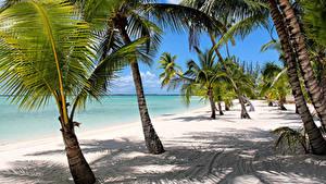 Фотографии Тропики Берег Пальмы Песок Пляж Bahamas