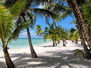 Фотографии Тропики Берег Пальмы Песке Пляже Bahamas
