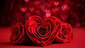Обои Розы Вблизи Красный Сердце Три цветок