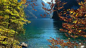 Фотография Германия Озеро Осень Камень Ветвь Konigsee Природа