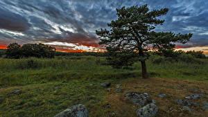 Фотография Швеция Рассветы и закаты Небо Камни Деревья Облака Природа