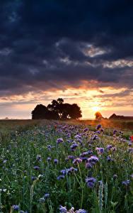 Обои Поля Рассветы и закаты Небо Облака Природа