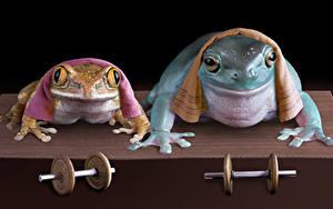 Фото Лягушки Полотенце 2 Гантели Смешные Животные