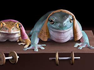 Фото Лягушки Полотенце 2 Гантеля Смешные животное