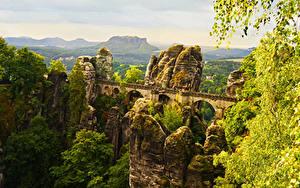Обои Германия Парки Мосты Скала Дерево Мхом Saxon Switzerland National Park Природа