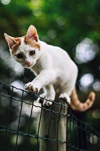 Фотография Кошка Белый Лапы Размытый фон Забора животное