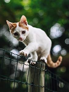 Фотография Кошка Белый Лапы Размытый фон Забора