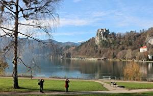 Картинки Словения Осенние Замки Озеро Дерево Скалы Bled castle, Lake Bled Природа