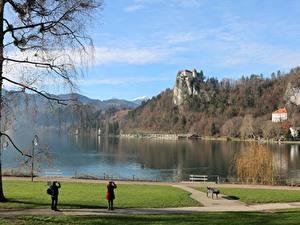 Картинки Словения Осенние Замок Озеро Дерево Скалы Bled castle, Lake Bled Природа