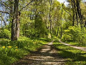 Фотографии Леса Дороги Лето Трава Деревья
