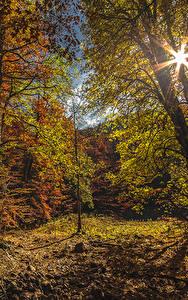 Картинка Черногория Парки Леса Осень Деревья Лучи света Листья Biogradska Gora National Park Природа