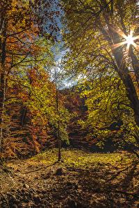 Картинка Черногория Парки Леса Осень Деревья Лучи света Листья Biogradska Gora National Park