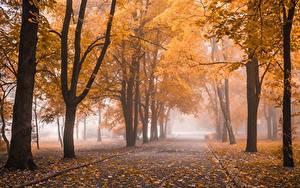 Картинка Парк Осень Дерева Листья Туман