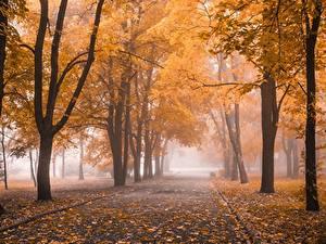 Картинка Парк Осень Дерева Листья Туман Природа
