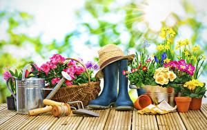 Картинки Первоцвет Нарциссы Маргаритка Доски Сапоги Шляпа Цветы