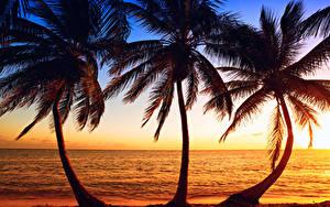 Картинки Тропический Рассветы и закаты Море Берег Пальма Втроем