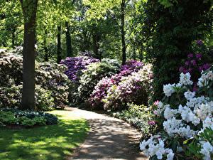 Фотография Германия Парки Рододендрон Кусты Rhododendronpark Bremen Природа
