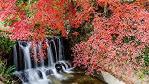 Фотографии Япония Парки Водопады Ветвь Утес Shiga Природа