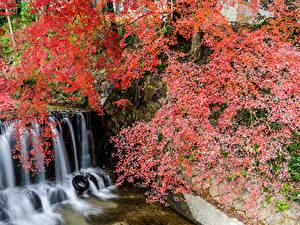 Фотографии Япония Парки Водопады Ветвь Утес Shiga
