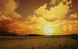 Фото Поля Небо Рассветы и закаты Облачно Солнца Природа