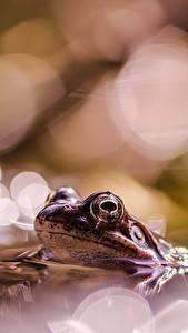 Фото Лягушка Боке животное