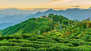 Обои Тайвань Здания Поля Гора Холм Кусты