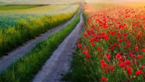 Картинка Дороги Маки Цветы