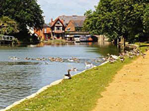 Картинка Англия Здания Реки Утки Причалы Oxford Oxfordshire Города