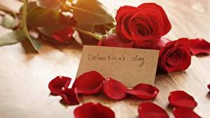 Фотографии День святого Валентина Розы Английский Красный Лепестки Цветы
