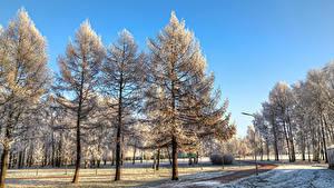 Фотография Россия Санкт-Петербург Парк Зима Деревья Снеге Park Esenina Природа