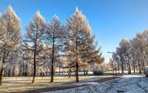 Фотография Россия Санкт-Петербург Парки Зима Деревья Снеге Park Esenina Природа
