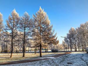 Обои для рабочего стола Россия Санкт-Петербург Парк Зима Деревья Снеге Park Esenina Природа
