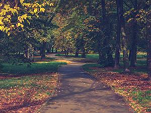 Картинка Парки Осенние Листва Деревья Тротуар