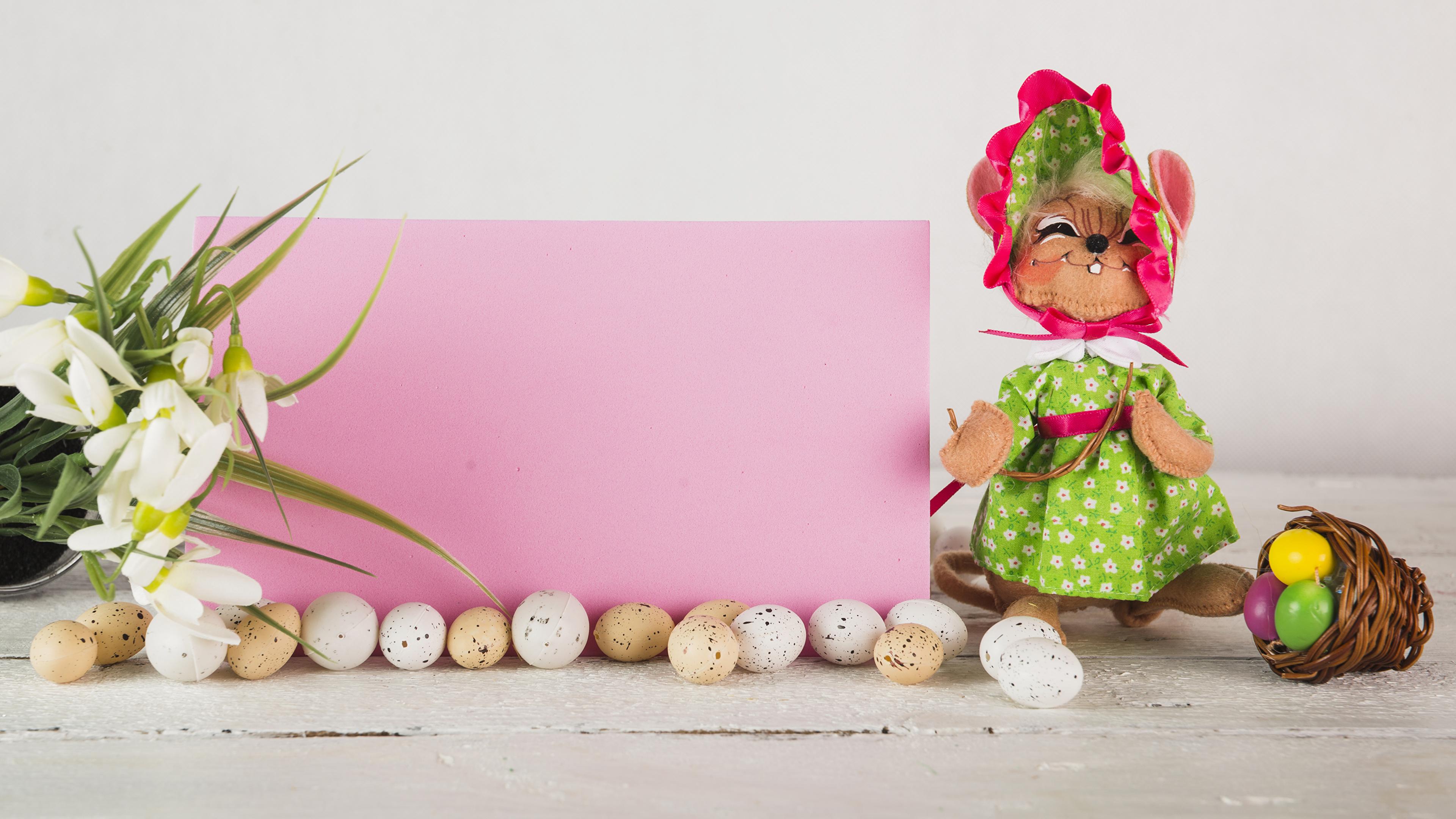 Фотографии Пасха Кролики Яйца Галантус Корзинка Шаблон поздравительной открытки Праздники 3840x2160 кролик яиц яйцо яйцами корзины Корзина Подснежники