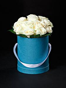 Фотография Розы Черный фон Белый Коробка Цветы