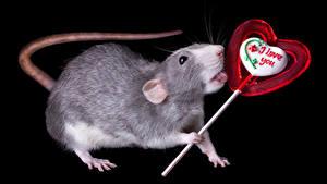 Фото День всех влюблённых Крысы Сладости Леденцы Черный фон Английский Животные